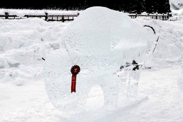 award winning buffalo ice sculpture at lake louise