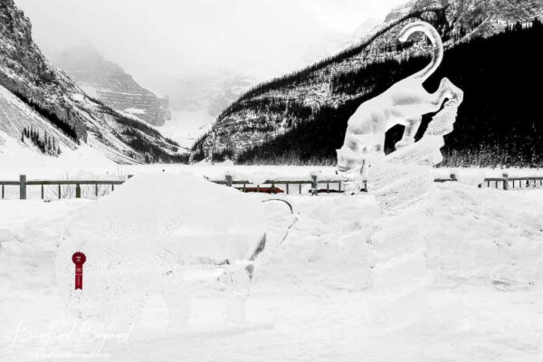 couagar chasing a buffalo ice sculpture lake louise