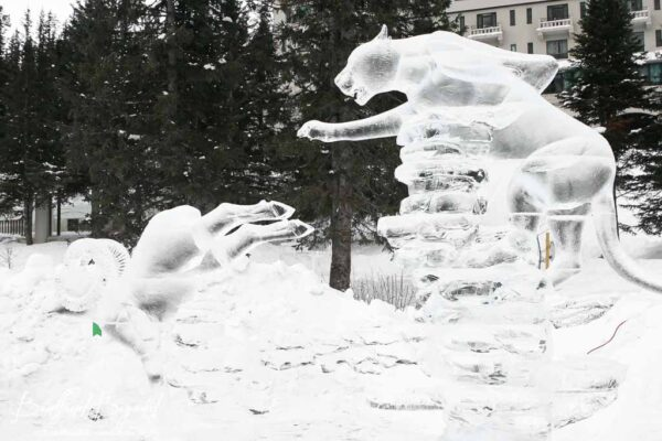 cougar chasing a ram ice sculpture lake louise