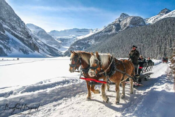 romantic-traditional-horse-drawn-sleigh-ride-lake-louise-canada-rocky-mountains-tourist-attraction