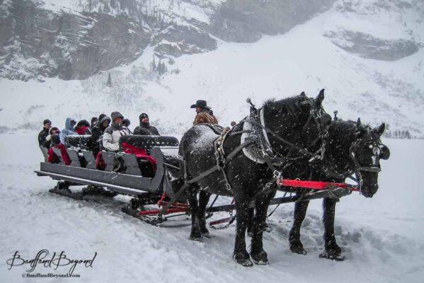 horse drawn sleigh in wintery lake louise