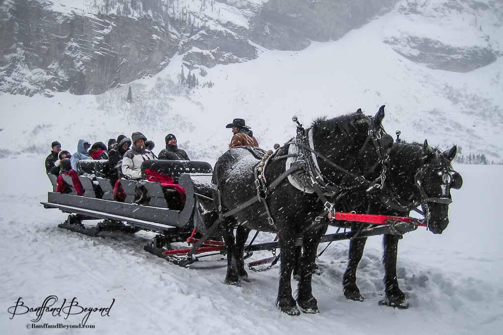 Durango: the perfect year-round wedding (or reunion ... |Horse Drawn Sleigh Rides Christmas