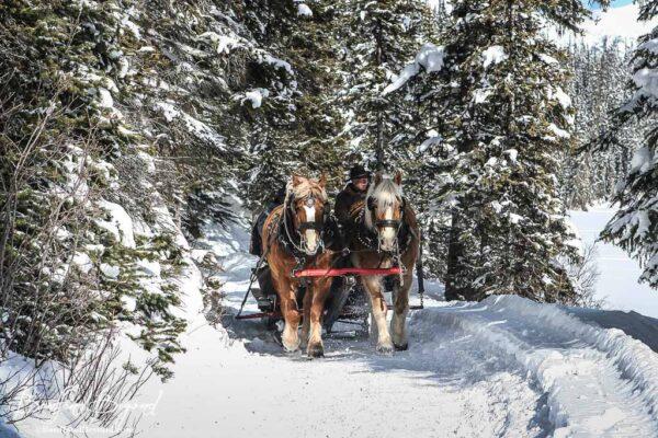 horse drawn sleigh on lake louise shoreline trail