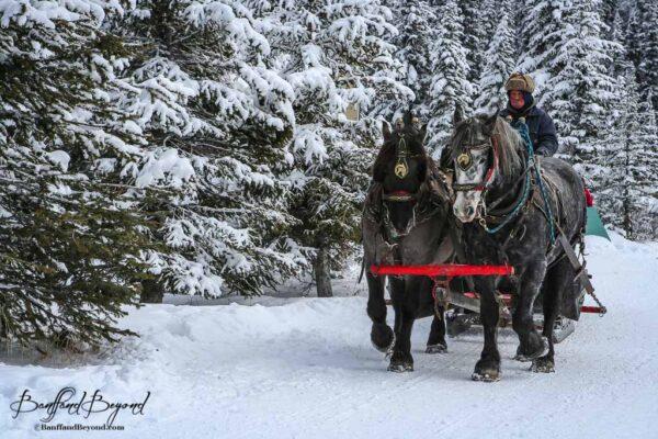 horse drawn sleigh ride in winter lake louise