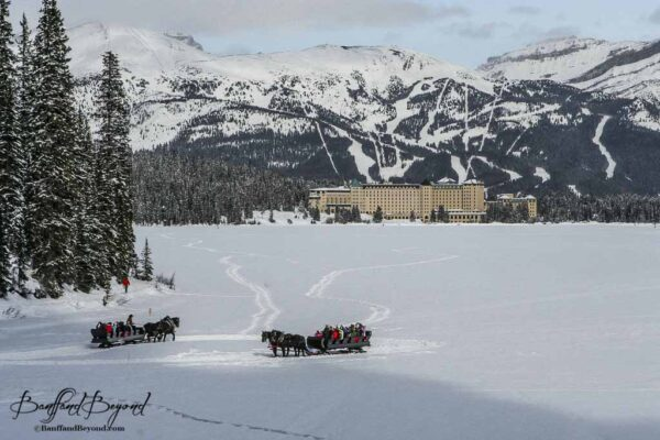 horse drawn sleighs with chateau lake louise hotel in background