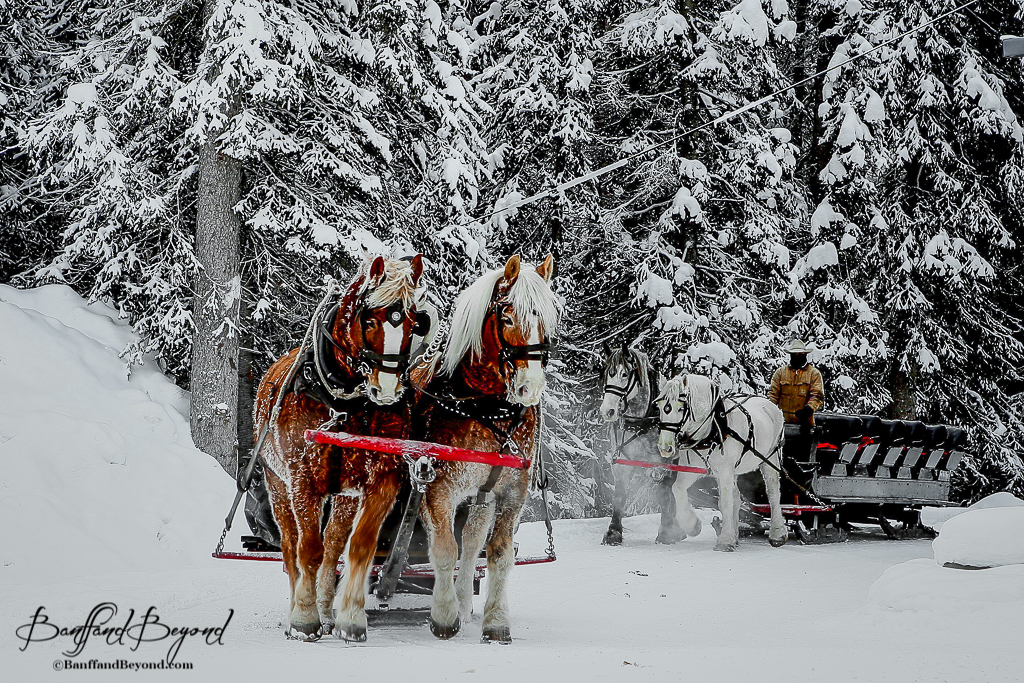 How to have a quintessential New England Christmas ... |Horse Drawn Sleigh Rides Christmas