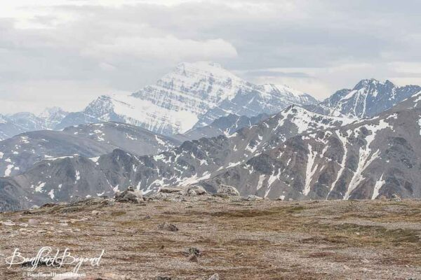 view of mount edith cavell from whistlers summit trail