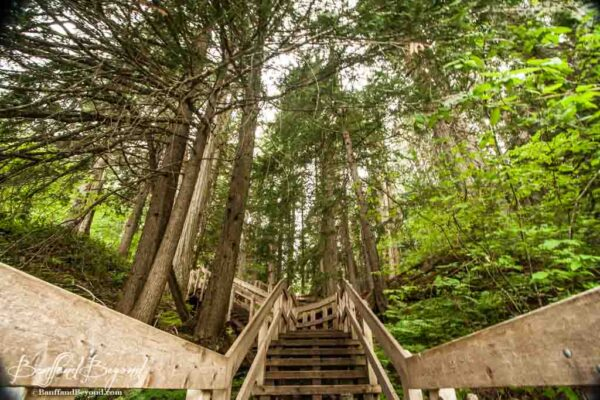 stairs along the giant cedars boardwalk trail in revelstoke