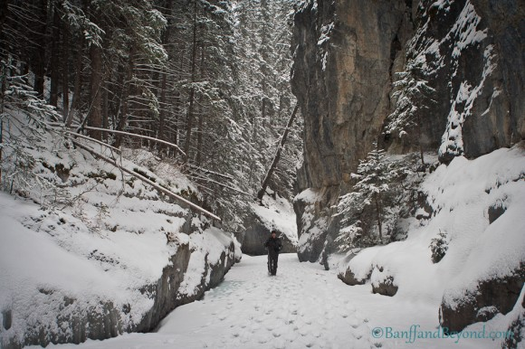 hiker-walking-on-frozen-creek-bed-in-grotto-canyon-valley-snow-winter-ice-limestone-cliff-canmore-alberta-nature