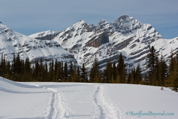 snow-shoe-tracks-cross-country-skiing-winter-petyo-lake-lookout-mountains-bow-summit-icefields-parkway-banff-national-park