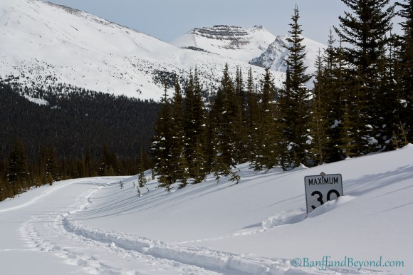 bus-route-road-peyto-lake-lookout-bow-summit-winter-snow-mountains-speed-sign-trees