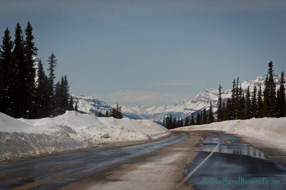 mountain-views-columbia-icefields-parkway-winter-season-wet-road-blue-sky-trees-driving-tourist-attraction-scenic-bow-summit