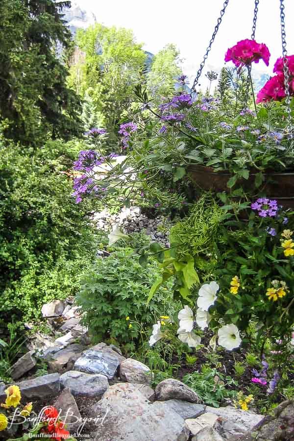 hanging flower baskets in banff cascade gardens
