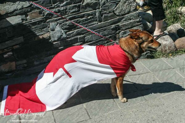 dog wearing festive cape for canada day celebration