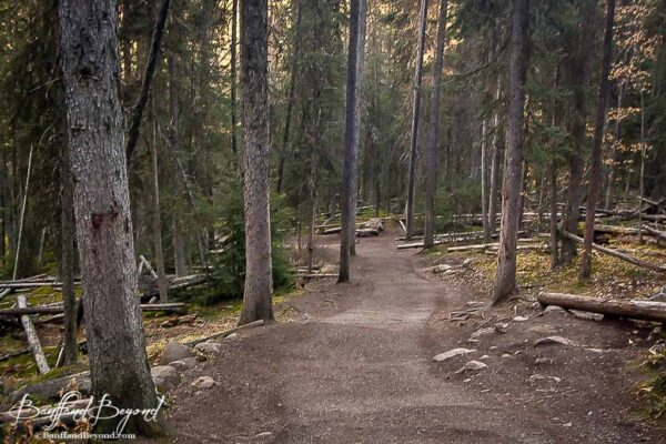 hiking trail to lower falls in johnston canyon