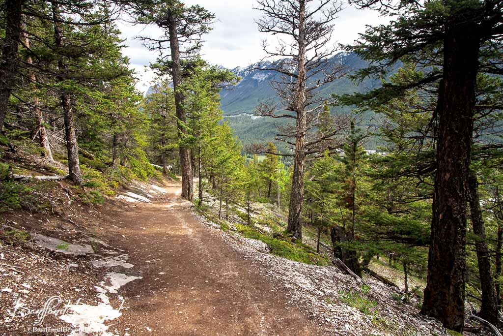 how to get to sulpher mountain trail banff