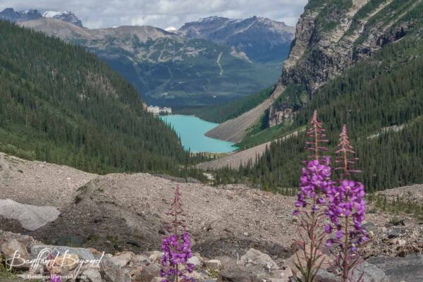 view of lake louise and chateau hotel in distance with wildflowers in foreground