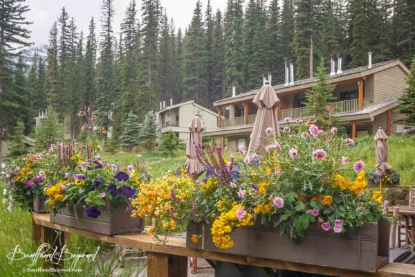 accommodations at moraine lake lodge with flower planters