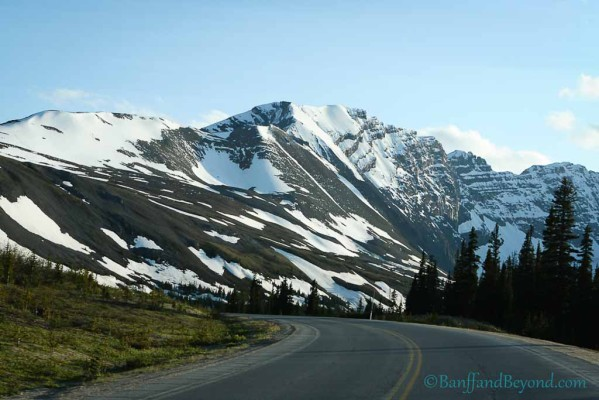 parker-ridge-trail-popular-hiking-trail-columbia-icefields-parkway