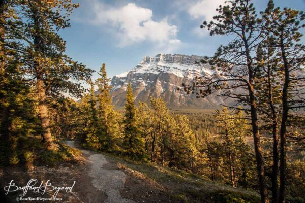 fall-foilage-banff-rocky-mountains-golder-yellow-colours-autumn