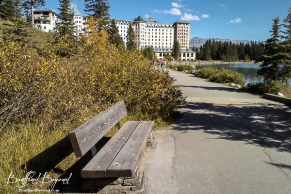 warm yellow fall colours at lake louise shoreline trail