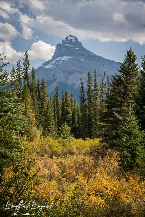 yellow meadows and mountain in banff during fall season