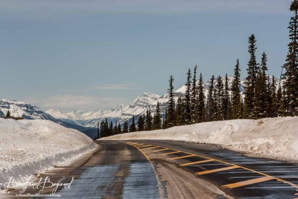 icefields parkway driving in winter months