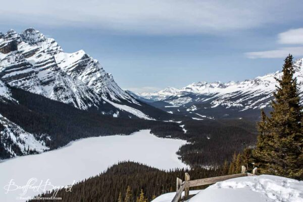 frozen peyto lake from the wooden platform viewing deck