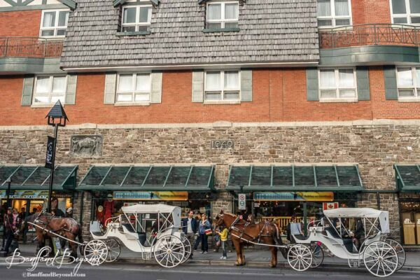 horse-drawn-carriages-downtown-banff-tourist-attraction-winter-sight-seeing