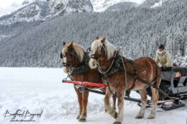 Winter Activities In Banff And Lake Louise For Non-Skiers