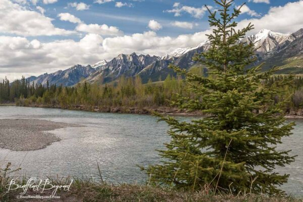bow-river-loop-easy-canmore-walk-scenic-mountain-views