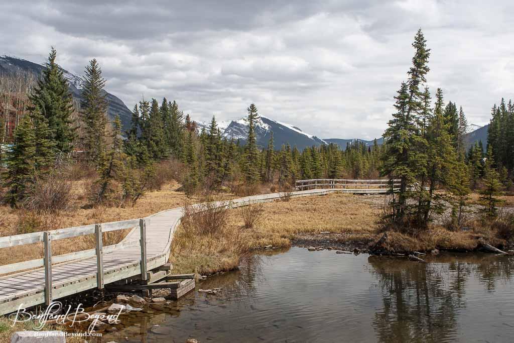Spring creek boardwalk