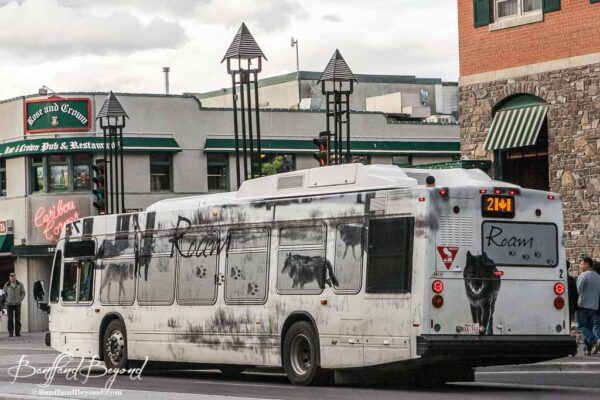 the wolf roam bus in banff