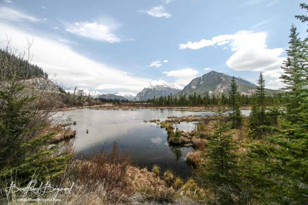 vermillion-lakes-quiet-area-photography-wildlife-viewing-mount-rundle-water-marsh