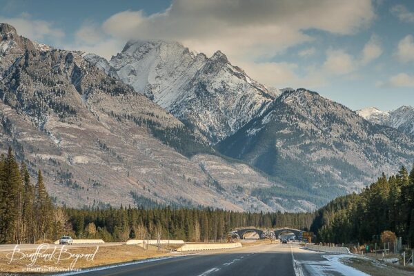 wildlife crossings on trans canada highway 1 in banff