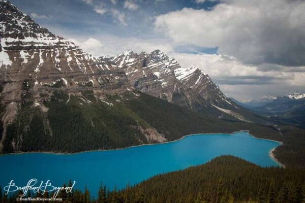 surreal blue water of peyto lake in banff national park