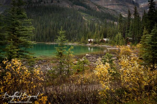 turquoise green water of lake ohara in yoho national park