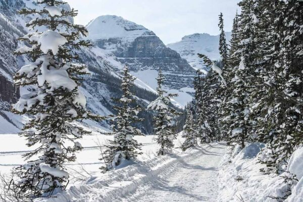 winter walk along snow coverred trail to the back of lake louise