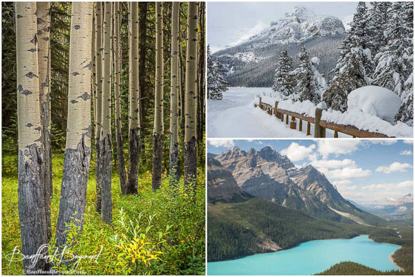 different-seasons-banff-rocky-mountain-autumn-spring-summer-snow-fall-foilage-turquiose-water