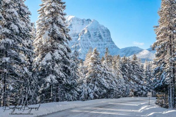 beautiful mountain scenery along the bow valley parkway