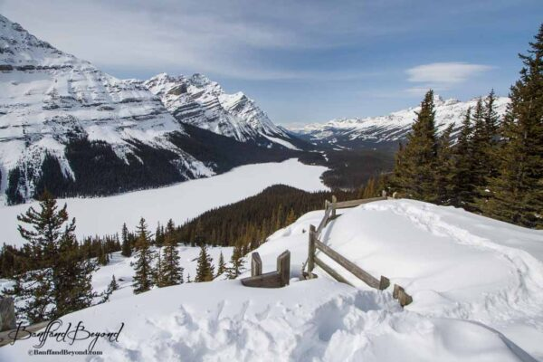 peyto lake lookout in winter