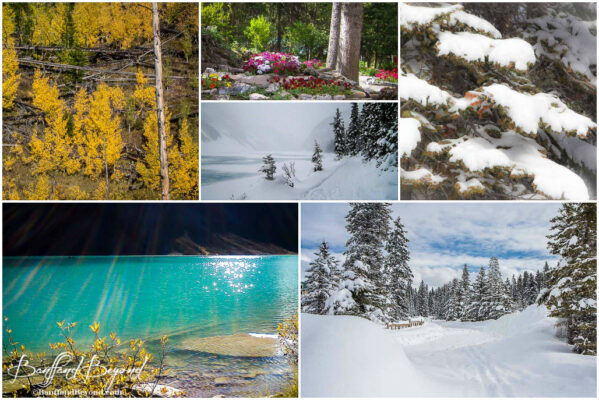 canada-rocky-mountain-weather-seasons-fall-autumn-spring-winter-summer-snow-flowers-flowers-sunshine