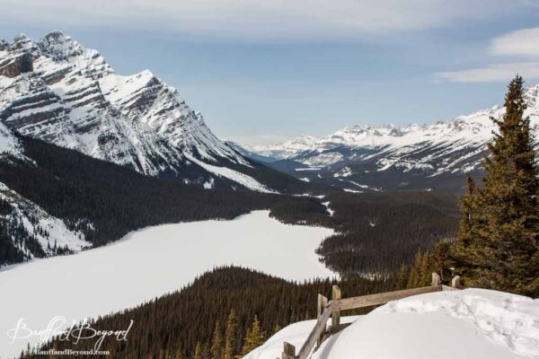 Peyto lake in spring time icefields parkway