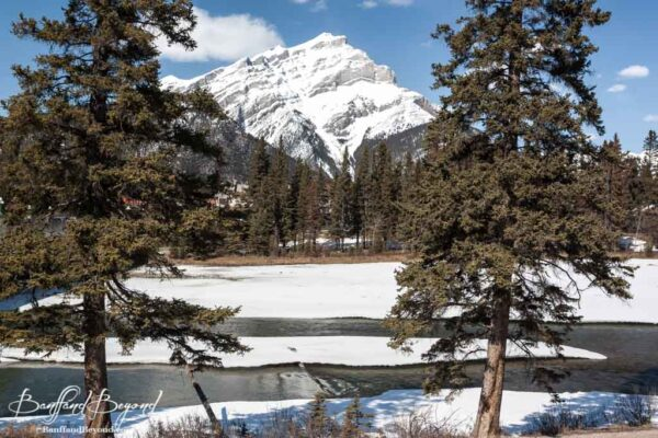 the thawing bow river with cascade mountain in the background in april