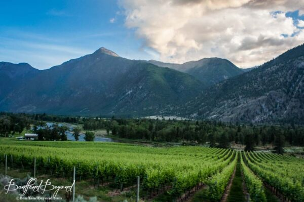 wine-vineyards-oliver-bc-okanagan-in-between-pentiction-and-osoyoos