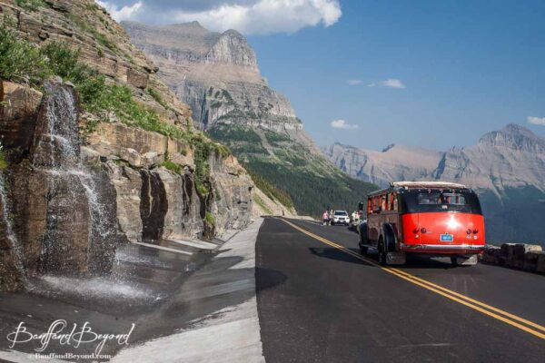 red jammer tour buses on the going to the sun road