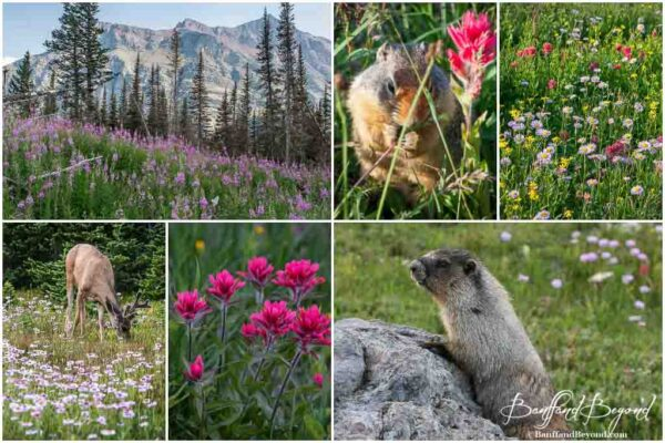 wildflowers and wildlife in glacier national park montana