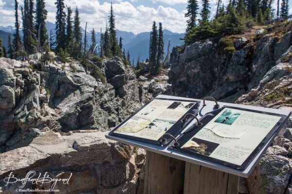 interpretative signs at points of interest on mount revelstoke summit