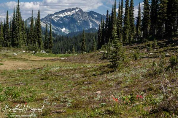 meadow with red wildflowers mount revelstoke summit