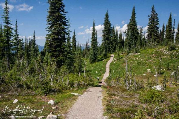 trails on the summit mount revelstoke meadows in the sky parkway